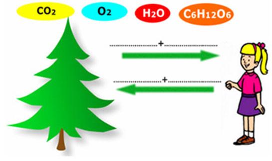 Solunum ve fotosentez nedir 77